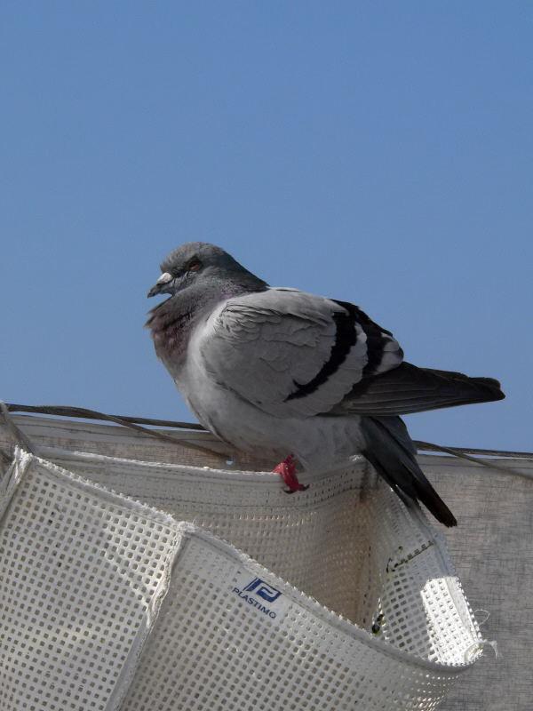 Dardacha Maroc http://www.pic2fly.com/Dardacha-Maroc.html